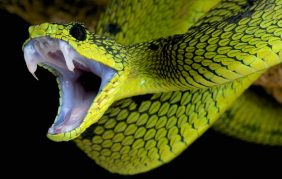 mơ thấy rắn cắn