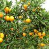 Người nông dân kiếm trăm triệu mỗi năm nhờ trồng loại cây này