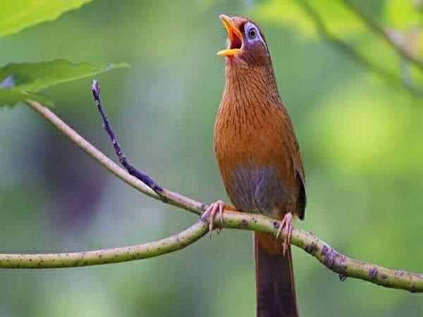 Nằm mơ thấy chim là điềm báo gì và con số may mắn
