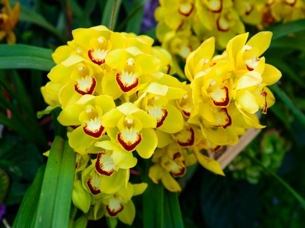 Mơ thấy hoa lan báo hiệu điều gì?